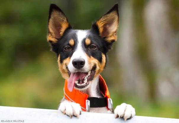 Zera er en glad hund som elsker å trene! Foto: Marie Balstad