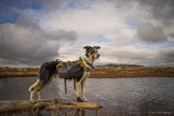 Fjellhund